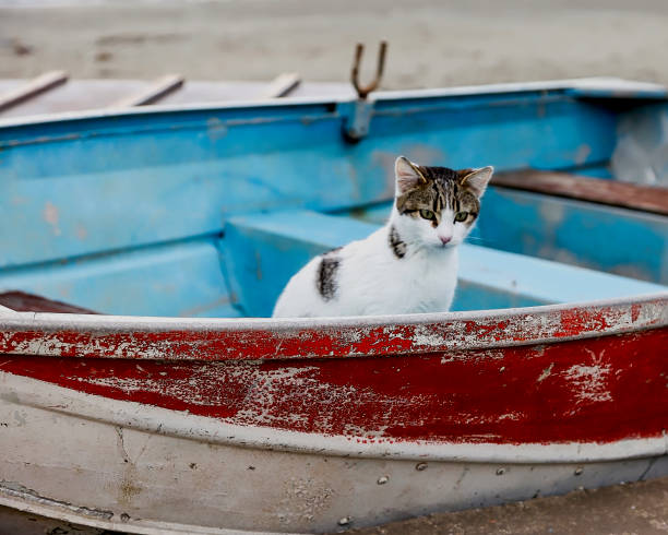 Cat In Boat stock photo