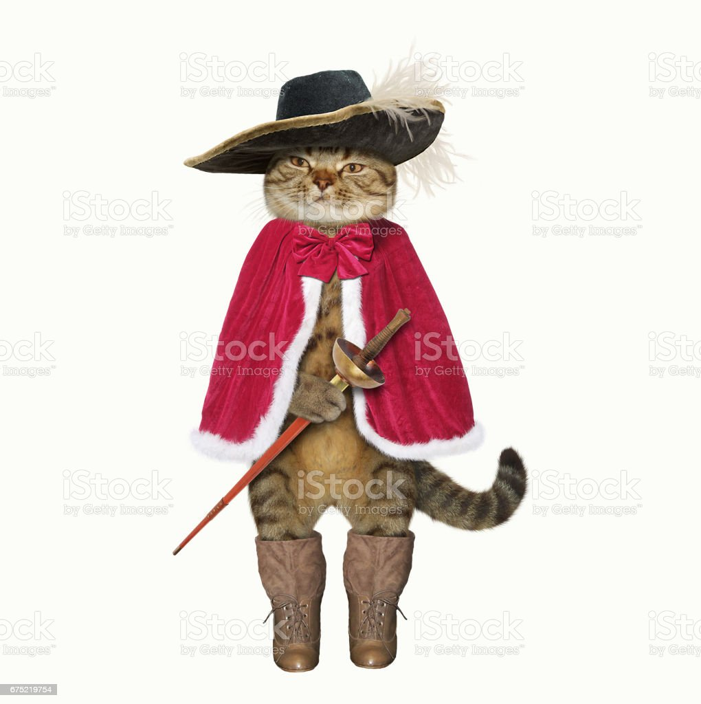 Cat in boots 2 royalty-free stock photo