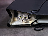 Cat in box in studio