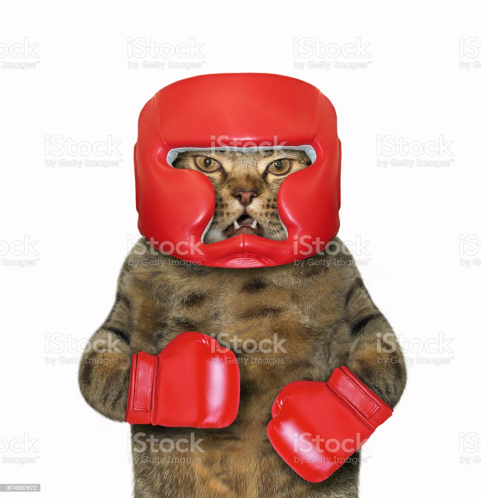 Cat in boxing gloves and a headgear stock photo