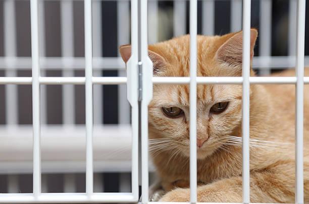 Cat in cage picture id164067709?b=1&k=6&m=164067709&s=612x612&w=0&h= 3ycb203pzf2smibtllz9bmkmmhxsy9ykhxu4npe4yg=