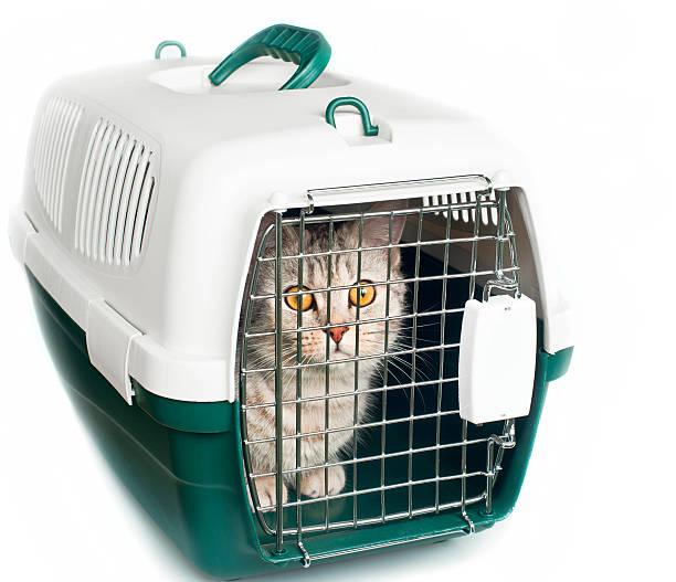 katze in käfig - katzenschrank stock-fotos und bilder
