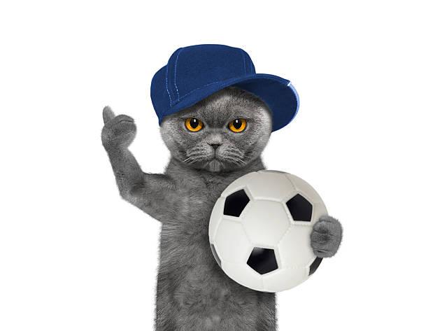 Cat in cap with a ball picture id538324226?b=1&k=6&m=538324226&s=612x612&w=0&h=b09dkdv11tkn8w9pjpuobayrz6 rqb1 9qxr359fmxg=