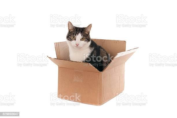Cat in cardboard box looking up picture id529693647?b=1&k=6&m=529693647&s=612x612&h=xr9o jwwoomhymywu5dgypv71fwzeeua2adbkgg4ane=