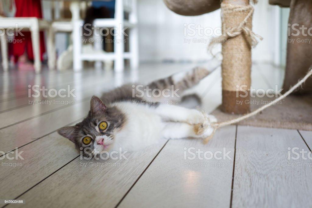 Katze in Cat Cafe in Ubud – Foto