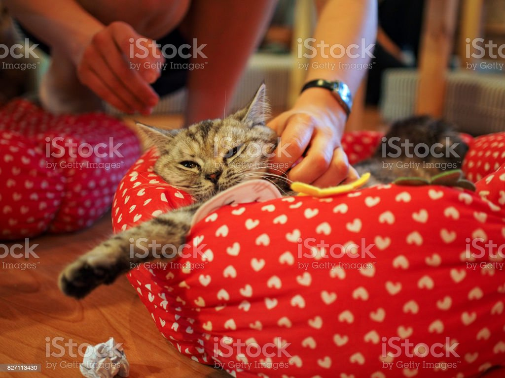cat in cat cafe stock photo