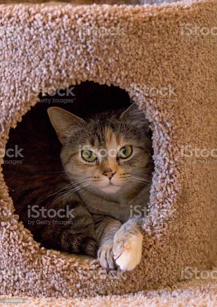 Cat in Cat Treehouse stock photo