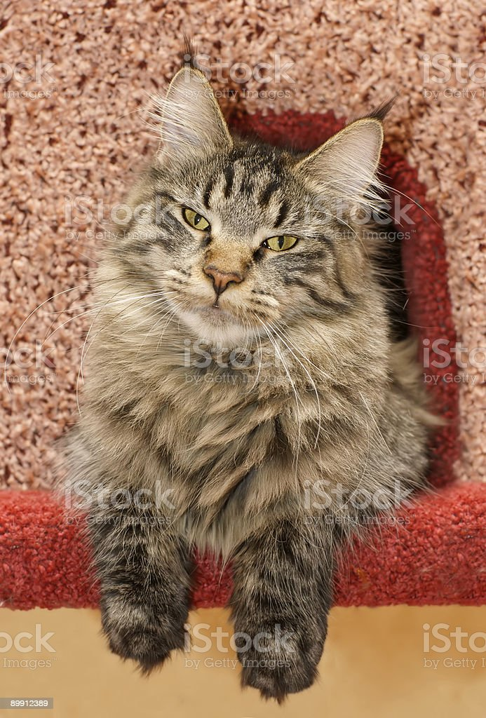 cat in cat`s house royalty-free stock photo