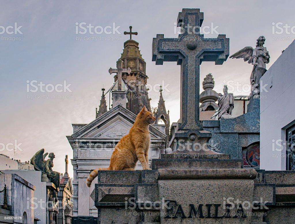 Cat in Cemetery stock photo