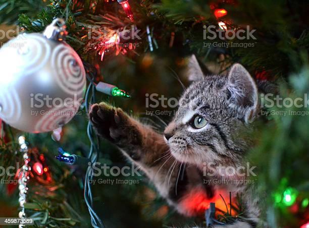 Cat in christmas tree picture id459873589?b=1&k=6&m=459873589&s=612x612&h=5tmlagchad7 yrmn7dipi1igdq5dvmrukacgydztaga=