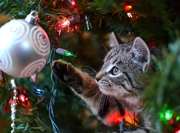 кошка в рождественская ёлка - котик яркий стоковые фото и изображения