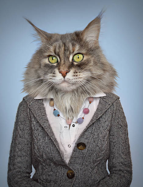 cat in clothes - mask disguise stock photos and pictures