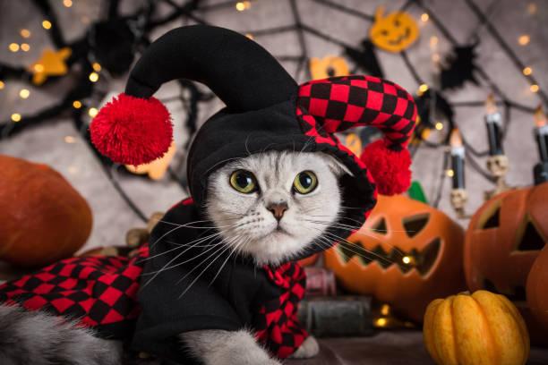 Cat in clown cloting at halloween picture id862381944?b=1&k=6&m=862381944&s=612x612&w=0&h=khkvvujlgede5uwoivvm65ojpxcwkeipzudcrkybklk=