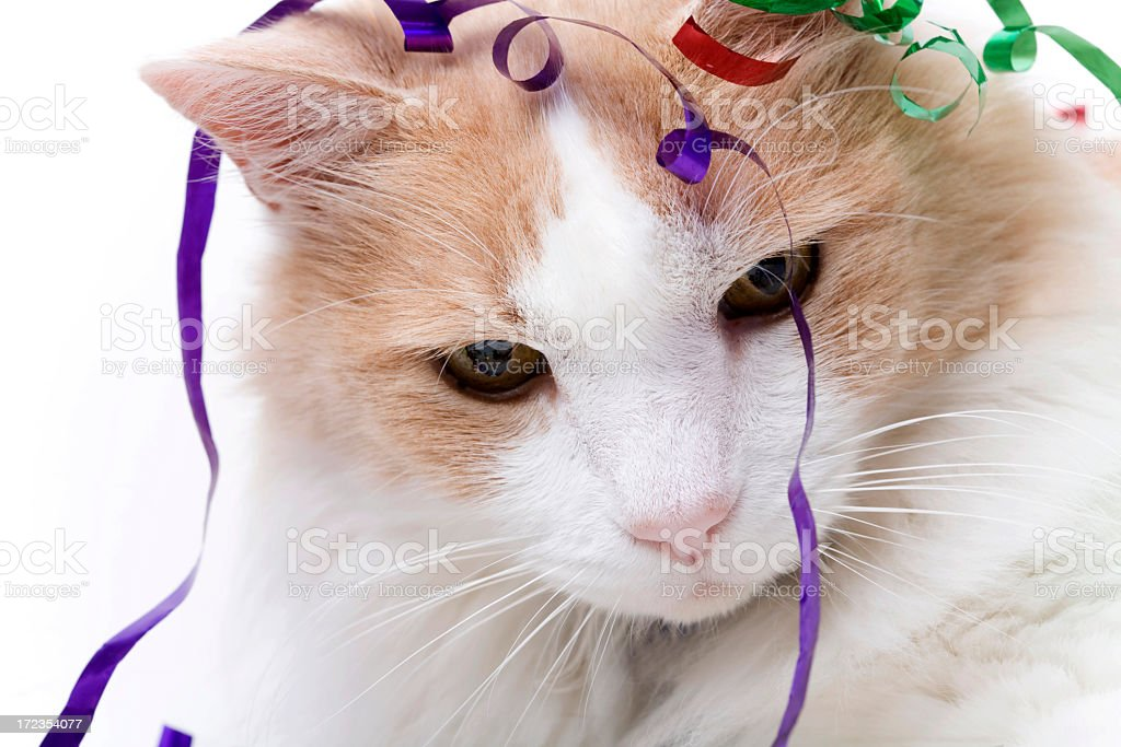 Cat en confeti foto de stock libre de derechos