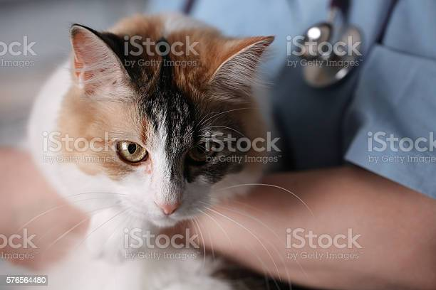 Cat in doctor arms picture id576564480?b=1&k=6&m=576564480&s=612x612&h=lskud7vcsgxu4wjz0rvdlmfcwebrnxea12com0u8d0o=