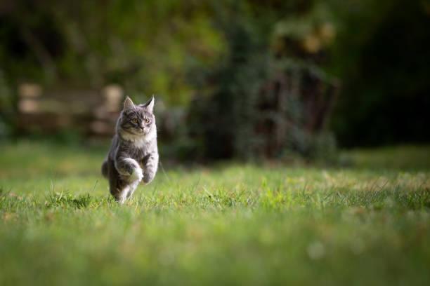 Cat in garden picture id1151493124?b=1&k=6&m=1151493124&s=612x612&w=0&h=bzuvtg krcr0vhaob himyykfkgzwvqygzvdzplwu6g=
