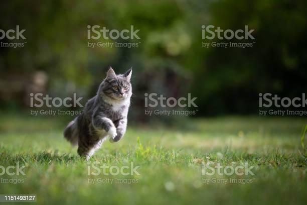 Cat in garden picture id1151493127?b=1&k=6&m=1151493127&s=612x612&h=msc4fmiqinhgpd5v6bezmkjgwms3sqcv1r oo4zw3ge=