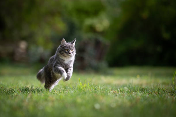 Cat in garden picture id1151493127?b=1&k=6&m=1151493127&s=612x612&w=0&h=j habyr52znmhffgj0dz9mu8qka7vn7n6qhj7r2p338=