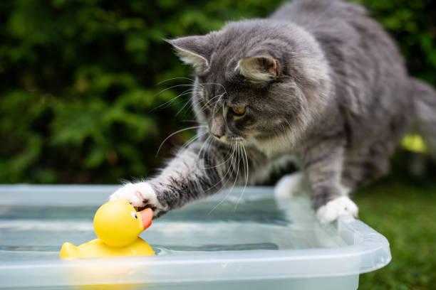 Cat in garden picture id1159272166?b=1&k=6&m=1159272166&s=612x612&w=0&h=79zaxzsm2snjoicn tvmlhi2ht6zsvo sbgr10jpzxs=