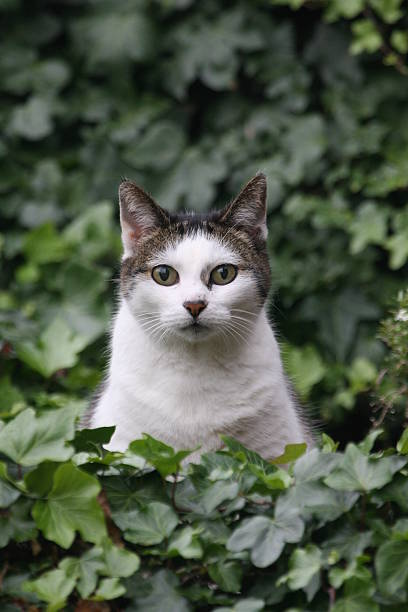 Katze in den Garten – Foto