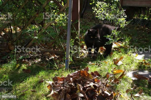 Cat in garden picture id859114974?b=1&k=6&m=859114974&s=612x612&h=c ha5iae266zgo16tikhjpycynmklv5whhizfqeuypg=