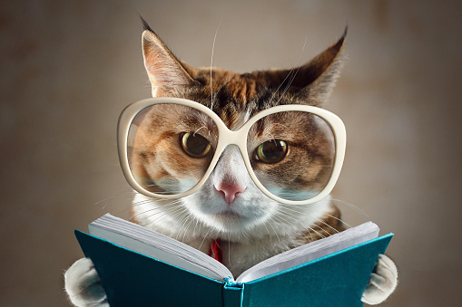 istock Cat in glasses holding a turquoise book and strictly looks into the camera. Concept of education 1125089587