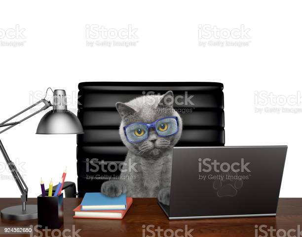 Cat in glasses manager is doing some work on the computer isolated on picture id924362680?b=1&k=6&m=924362680&s=612x612&h=2sfi0fw j9juh8dxglehfigu u40u bj3i0rlziikso=