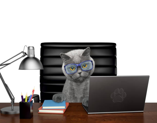 Cat in glasses manager is doing some work on the computer isolated on picture id924362680?b=1&k=6&m=924362680&s=612x612&w=0&h=j6am iktjchqhsse7u2ti 6zkiu0168vfgam5prizry=