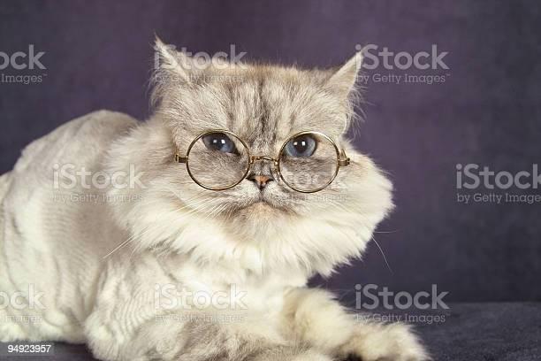 Cat in glasses picture id94923957?b=1&k=6&m=94923957&s=612x612&h= q1xrvfdr6em7vkbav ovfnsroyid2lph0g zowzkbw=