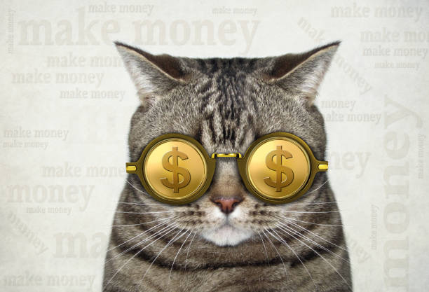 Cat in gold dollar glasses 2 stock photo