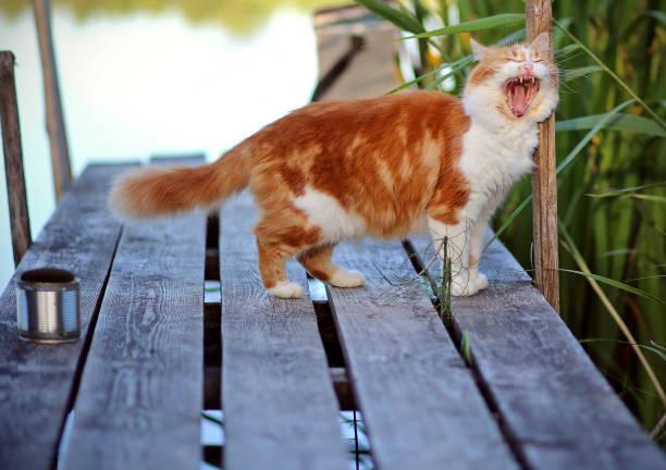 Cat in Green Grass in Summer. Cat fishing, lake, bridge, asking for fish stock photo