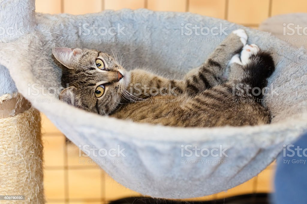 cat in hammock stock photo