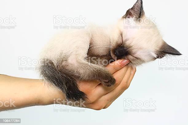 Cat in hand picture id106477284?b=1&k=6&m=106477284&s=612x612&h=qnq01sw0ghthrmmc4d5v6nrqrx7qtrqsqtqg8i06kkg=