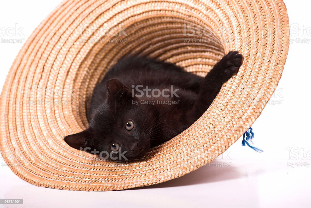 Cat in hat royalty-free stock photo