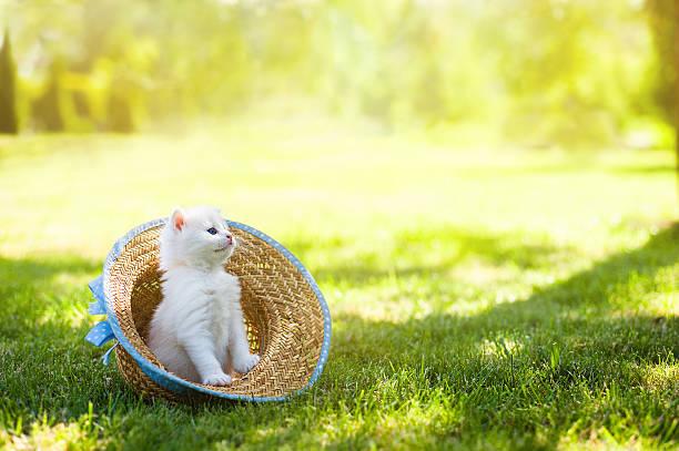 Cat in hat picture id528443280?b=1&k=6&m=528443280&s=612x612&w=0&h=zqultfoq zclxr8malmnhy5q eyr1tevk d u5iqli4=