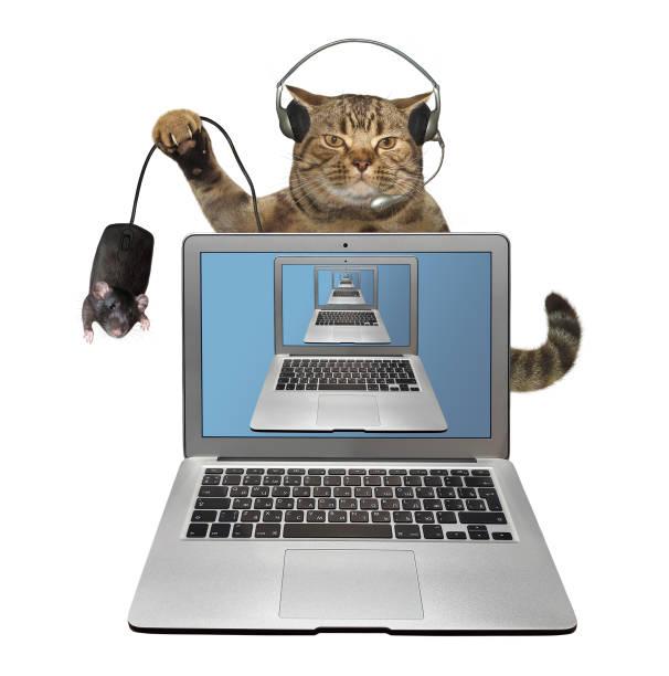 Cat in headphones behind laptop picture id1216404182?b=1&k=6&m=1216404182&s=612x612&w=0&h=96bqjvd6sqh tx8sthh5yt dn0xe4chjmvcgy8t191w=