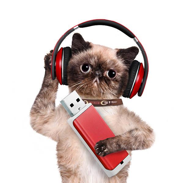 Cat in headphones holding a paw flash picture id528740389?b=1&k=6&m=528740389&s=612x612&w=0&h=1va3qpvgeueoyf ayyzf7fbwhalweymqqdi a8hmgkw=