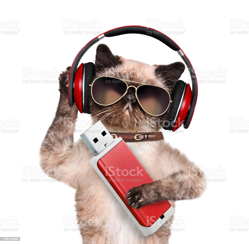 Cat in headphones holding a paw flash. stock photo