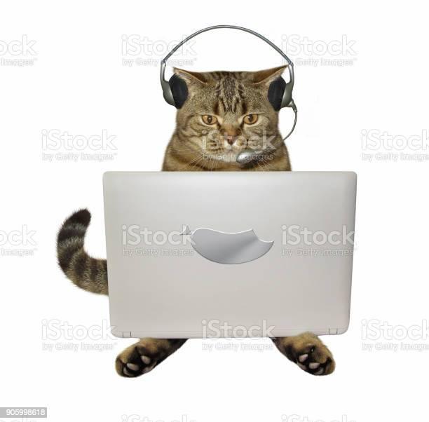 Cat in headphones with a laptop picture id905998618?b=1&k=6&m=905998618&s=612x612&h=lgfiwseljcc bpnnkm8lero4qoaebzophvrqd mpmuu=