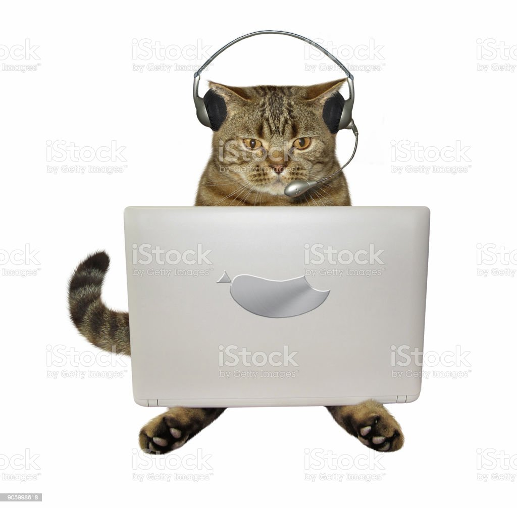 Cat in headphones with a laptop stock photo
