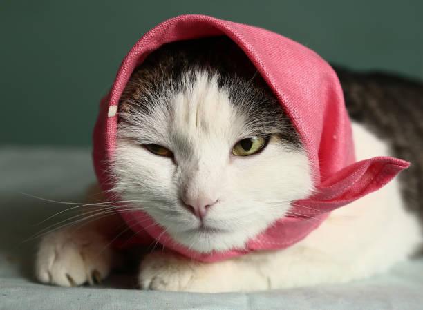Cat in headscarf pink shawl close up portrait picture id849500442?b=1&k=6&m=849500442&s=612x612&w=0&h=bpuw3kwun8snhip5kl13kcac7guhrpeber512ukr9au=