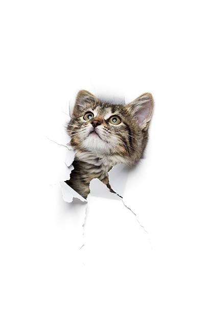 Cat in hole of paper picture id617880520?b=1&k=6&m=617880520&s=612x612&w=0&h=ofhrcr6wnso3lo7xnpmew0sxcj47adrkw3fr3rdm4k8=