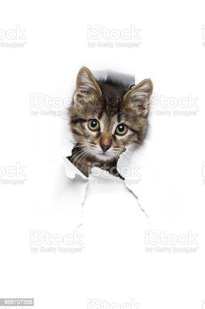 Cat in hole of paper picture id856707338?b=1&k=6&m=856707338&s=612x612&h=ofcrbxgvr7p4w0hi2k4vzv7t4vnawfx0br1c6lvhpty=