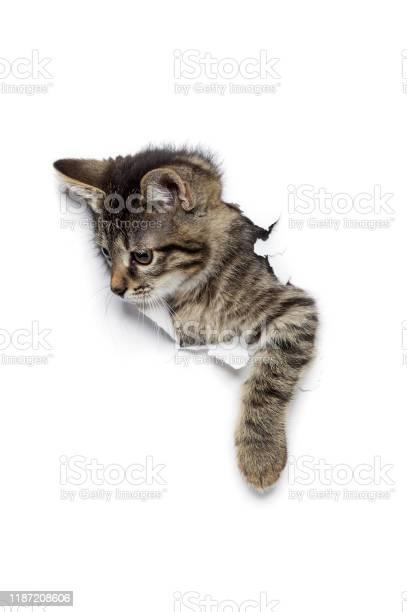Cat in hole picture id1187208606?b=1&k=6&m=1187208606&s=612x612&h=thttepnuoijivgmgmsendl3lp1xxomcumcoe5wx9wpi=