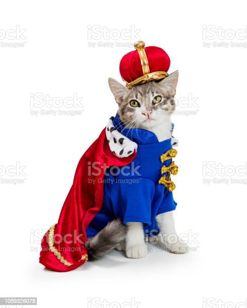 Cat in king halloween costume picture id1059326078?b=1&k=6&m=1059326078&s=612x612&h=99ugaautiqwudhej3s9khan to27yy8vz0iskcnmsa4=