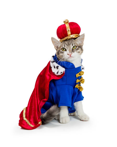 Cat In King Halloween Costume Funny cat wearing royal king Halloween costume isolated on a white background halloween cat stock pictures, royalty-free photos & images