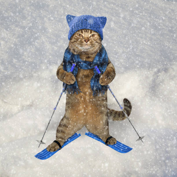Cat in knetted hat on skis picture id850922448?b=1&k=6&m=850922448&s=612x612&w=0&h=5vbrrj vig38jek8 qxkqyucn0jeduby06fvqa9z 1k=