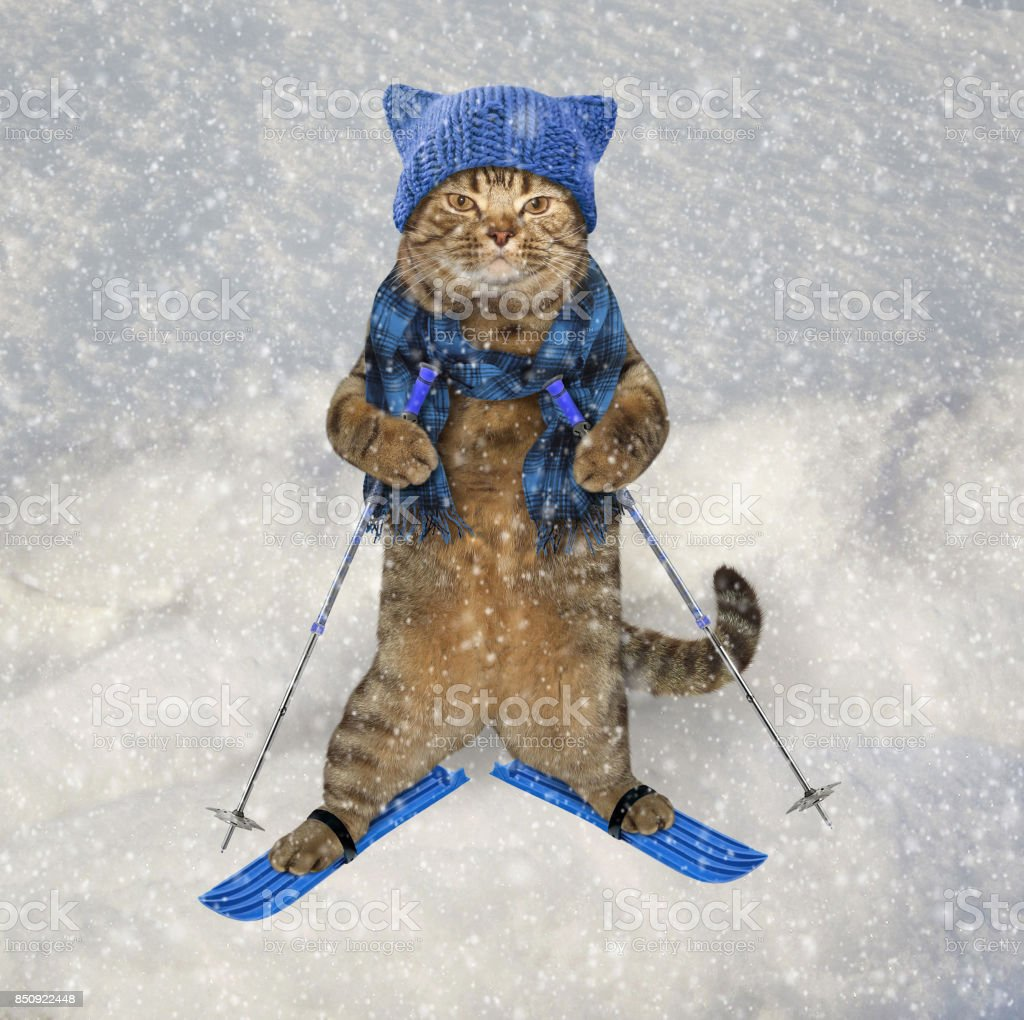 Cat in knetted hat on skis stock photo