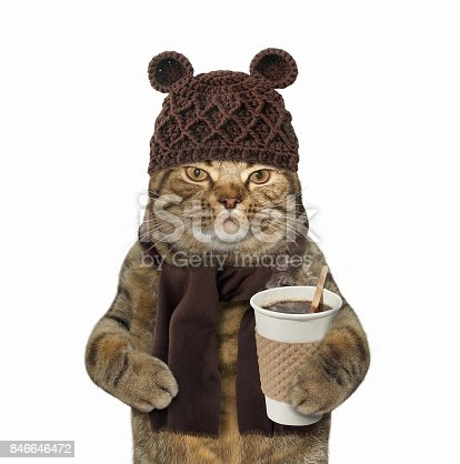 istock Cat in knitted had with coffee 846646472