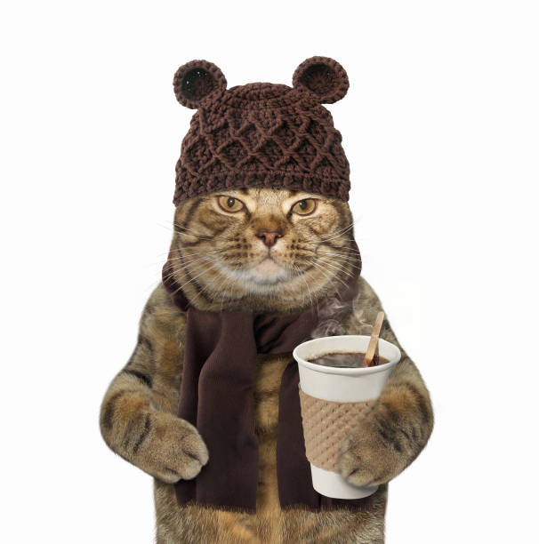Cat in knitted had with coffee picture id846646472?b=1&k=6&m=846646472&s=612x612&w=0&h=pxpqavkq3 c 1i3aiy axmdey6hyfk8e5 wu0degmxi=
